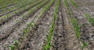 Sono un agricoltore e oggi vendo il mio terreno. Chi incassa la Pac 2017?