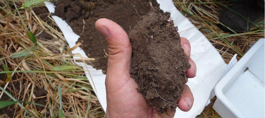 Dalla sostanza organica dipendono la fertilità del suolo e la produttività delle colture: ecco perché