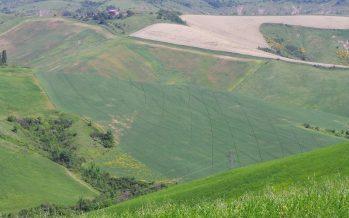 Agricoltura, stop all'abbandono dei terreni in collina: si può fare reddito se si cambia mentalità