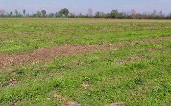 Minime lavorazioni del terreno nel bresciano con semina contemporanea del mais
