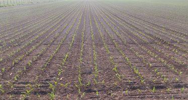 Il recordman di produzione di mais ha scelto lo spandiconcime che non sbaglia mai