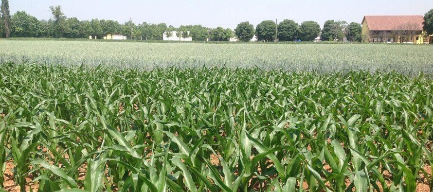 Pac, i piccoli agricoltori non possono trasferire i titoli: ecco come risolvere il problema