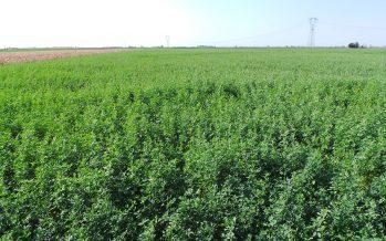 Agricoltura, la ricetta per ridurre le perdite economiche e fare le scelte giuste