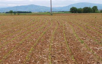 Ecco il pioniere di una nuova agricoltura dove i conti tornano