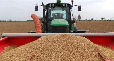 Cereali e oleaginose biologici, la conversione conviene: i prezzi di mercato raddoppiano