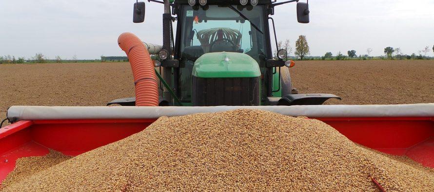 9a540ac4f4 Cereali e oleaginose biologici, la conversione conviene: i prezzi di mercato  raddoppiano