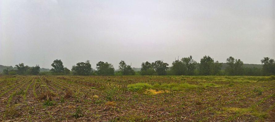 Semina su sodo del mais in condizioni limite con Kverneland Optima HD e-drive