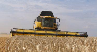 Raccolta frumento, i prezzi non sono allettanti. Ma qual è il costo di coltivazione per non perdere?