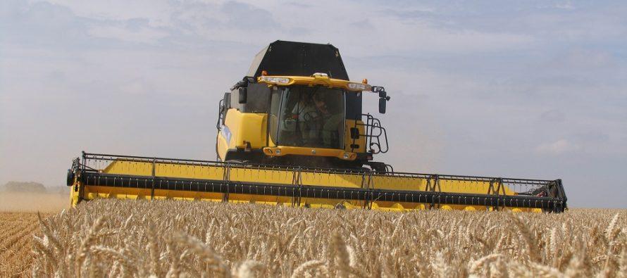 8bfd8c19b6 Raccolta frumento, i prezzi non sono allettanti. Ma qual è il costo di  coltivazione per non perdere?