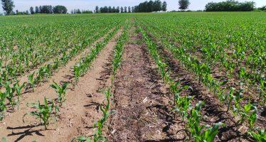 Agricoltura, Pac: ecco perché i pagamenti diretti sono un'ingiustizia sociale