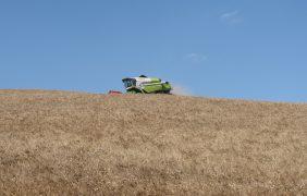 Grano duro: conviene coltivare con mezzi propri o rivolgersi al contoterzista?