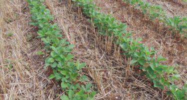 Agricoltura, le scoperte dell'estate: ci vuole più soia europea e occorre formazione sulla precisione