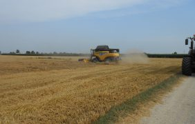 100 quintali/ettaro dal grano Alteo: la buona tecnica premia anche con bassi prezzi di mercato