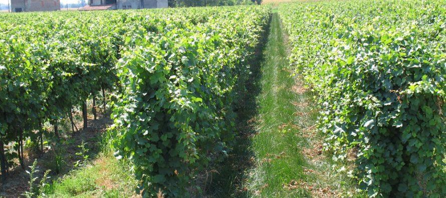Agricoltura, troppa voglia di vite: la macchina burocratica del Mipaaf è in crisi