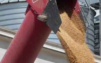 Grano duro: con 65 quintali/ettaro di produzione e contratto pre-campagna, i conti tornano