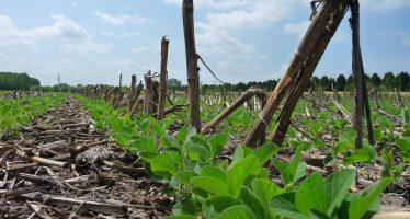 """Far vivere il suolo per migliorare l'agricoltura: le conclusioni del progetto """"Help Soil"""""""