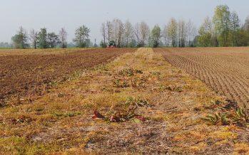 Agricoltura conservativa: una scelta strategica che ha bisogno di più agronomia, competenza e innovazione