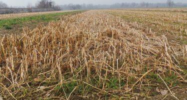 Agricoltura, come scegliere la cover crop più adatta? Dipende dal risanamento che si vuole