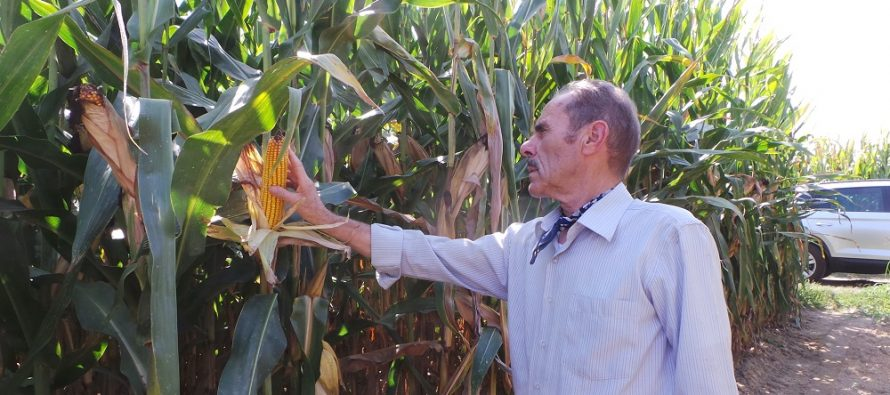 Agricoltura, essere innovatori e produrre tanto è solo una questione di testa