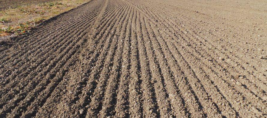 Pac, il papà non agricoltore eredita 9 ettari con titoli, ma la conduzione sarà del figlio agricoltore: che fare?