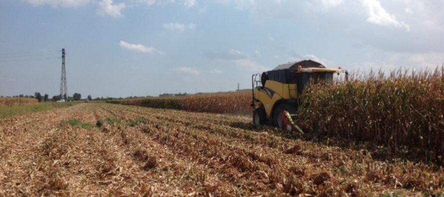 Il mais su strip-till e minima produce come sull'arato al Pag di Acquafredda
