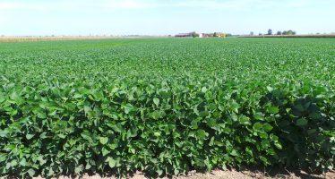 Agricoltura: con la soia a 35 euro, si incassano 900 euro/ettaro se si fanno le scelte giuste