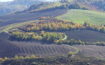 Pac 2018: le ultime modifiche al greening per i terreni a riposo e le aree ecologiche