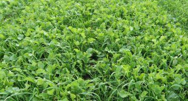 Terreni più fertili, strutturati e sani grazie alle colture di copertura: la nuova linea Viterra