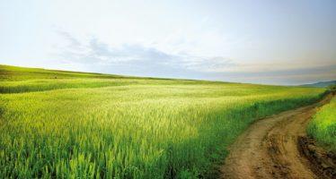 Azotofissatrici su Efa, no ai fitofarmaci solo da semina a raccolta: una scappatoia per la soia?