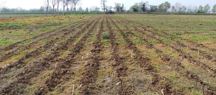 Glifosate: ancora 5 anni di utilizzo in agricoltura? Poi si dovranno cercare valide alternative