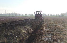Frumento: aratura ed erpicatura contro semina su minima, ecco quanto si risparmia