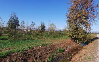 Domanda Pac: i fossati possono rientrare nelle aree ecologiche e si misurano in metri quadri