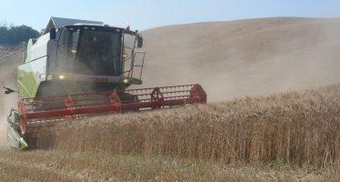 Grano duro: i contratti Divella e De Matteis garantiscono all'agricoltore 27 euro/quintale
