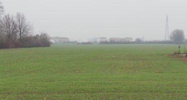 Frumento in salute su terreno a minima lavorazione, con perfetto smaltimento dell'acqua piovana