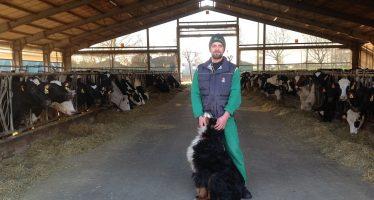 Latte bio per Grana Padana bio: la via sostenibile che fa contente le vacche e il portafogli