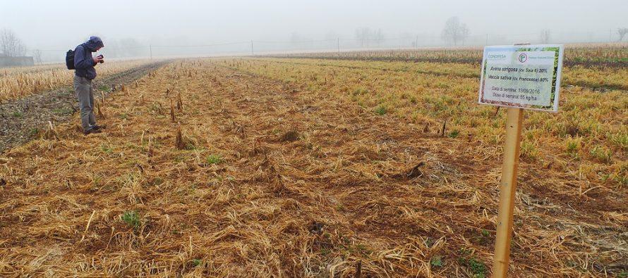 Agricoltura: le colture di copertura per apportare azoto, aumentare la sostanza organica e combattere i parassiti