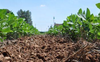 EM Sole, la nuova varietà di soia che farà decollare la filiera dell'alta qualità