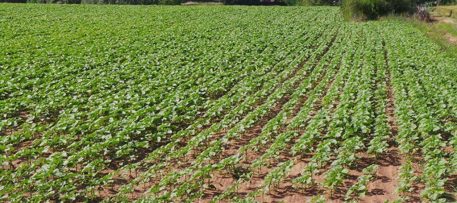 Novità Pac 2017: trattenute sui pagamenti, divieto di concia del seme e uso di azotofissatrici su aree ecologiche
