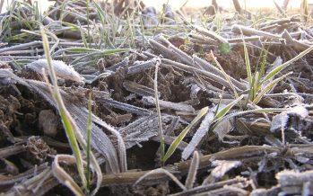 5 agricoltori su 6 disposti a coltivare ibridi modificati con il nuovo genome editing