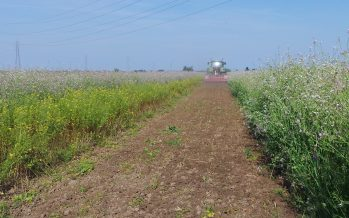 L'erpice Qualidisc sulle cover crops Viterra e nella preparazione del terreno per il mais