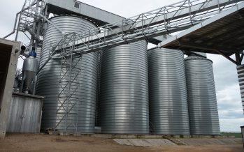 Grano duro, stoccaggio differenziato e contratti: finalmente gli operatori valorizzano il raccolto