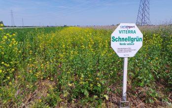 Cover crops Viterra: effetto nematocida, riduzione delle malerbe, più sostanza organica e buona struttura del suolo