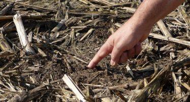 """Petrini denuncia il """"veleno nascosto nella terra"""", ma gli agricoltori hanno già voltato pagina"""