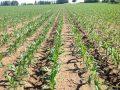 """""""La battaglia contro gli OGM era sbagliata"""": l'autocritica di uno scienziato oppositore pentito"""