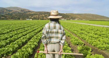 Anomalie Pac: altre due assurde testimonianze di agricoltori