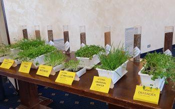 Rafano Defender, non solo cover crops: ecco la soluzione per contrastare nematodi e funghi patogeni