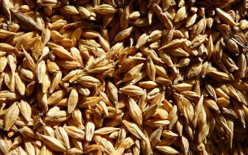 Frumenti, non speculiamo sul seme: quello certificato ha più garanzie dell'aziendale
