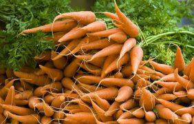 L'agricoltura biologica corre verso i 2 milioni di ettari: +70% di superficie in 8 anni
