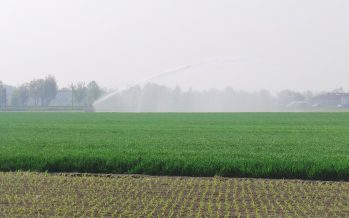 Ismea svende 7700 ettari di terreno agricolo a giovani under 41