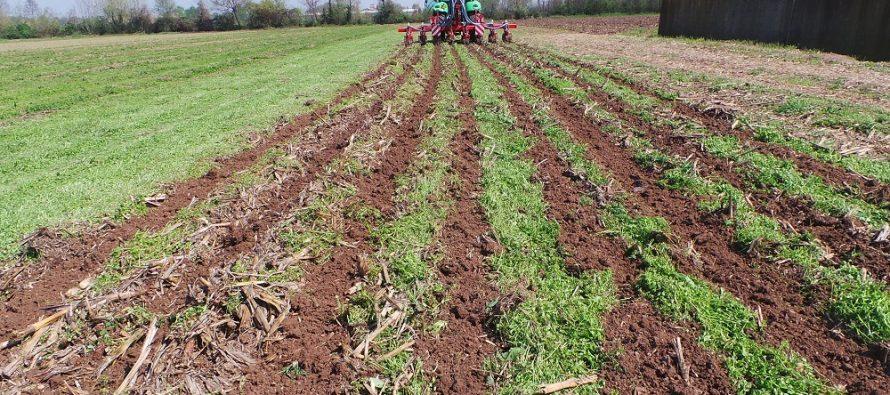 Agricoltura: al termine del contratto di affitto, il proprietario del terreno può pretendere anche i titoli Pac?